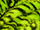 Fabric Color: Lime Tiger