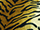 Fabric Color: Tiger 19