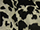 Fabric Color: Black Cow